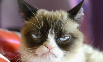 Grumpy Cat Meme – Things You Should Know