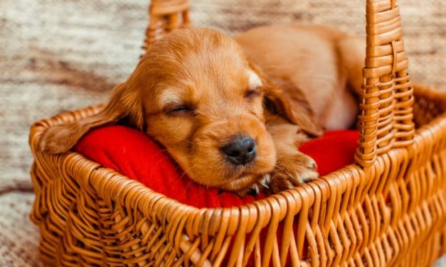 What Do Dogs Dream About? – Find Out What They Dream