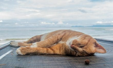 Why Do Cats Sleep So Much & How Many Hours a Day Do Cats Sleep?