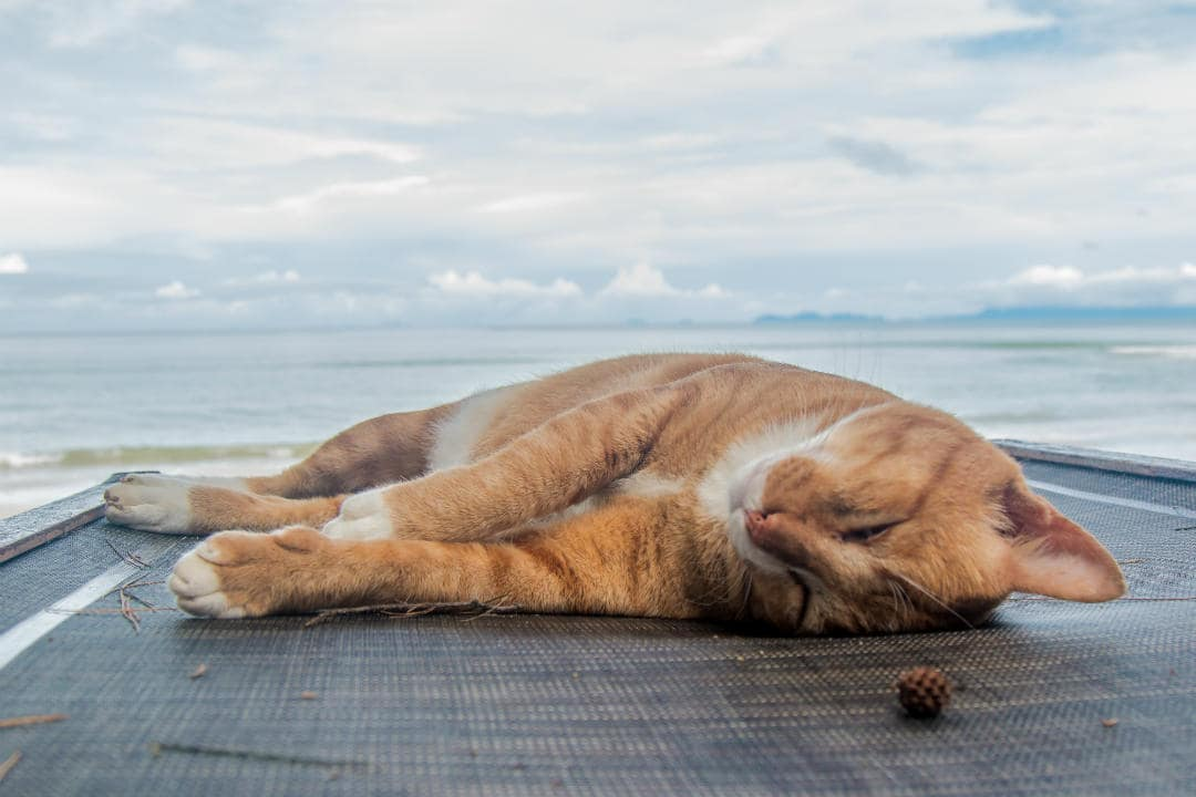 Why Do Cats Sleep So Much - How Many Hours a Day Do Cats Sleep