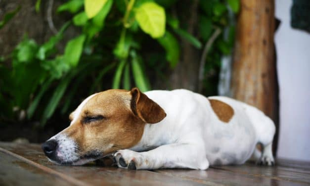 Why do Dogs Sleep So Much? 6 Important Factors