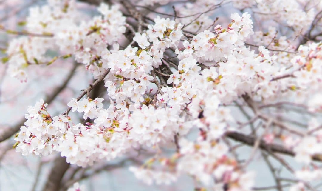 When is The First Day of Spring? – Everything About Vernal or Spring Equinox