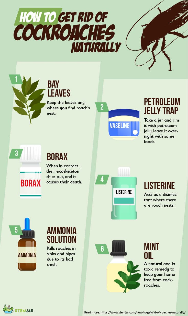 How to get rid of cockroaches naturally infographic