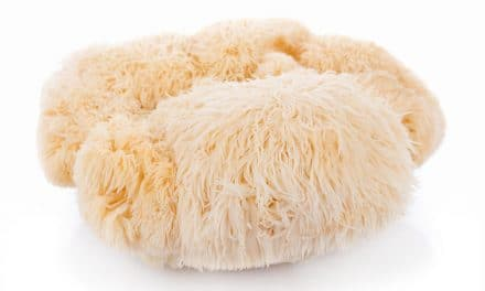 Top 8 Health Benefits of Lion's Mane Mushroom & Side-Effects