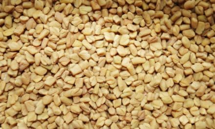 12 Amazing Fenugreek Benefits on Health, Nutritional Profile & Precautions