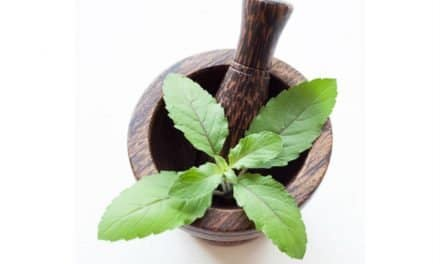11 Health Benefits of Holy Basil and Its Uses