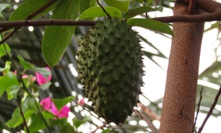 What is a Soursop Fruit? Benefits, Side Effects & Ways to Eat It
