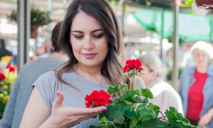 13 Benefits of Geranium Essential Oil for Skin and Health
