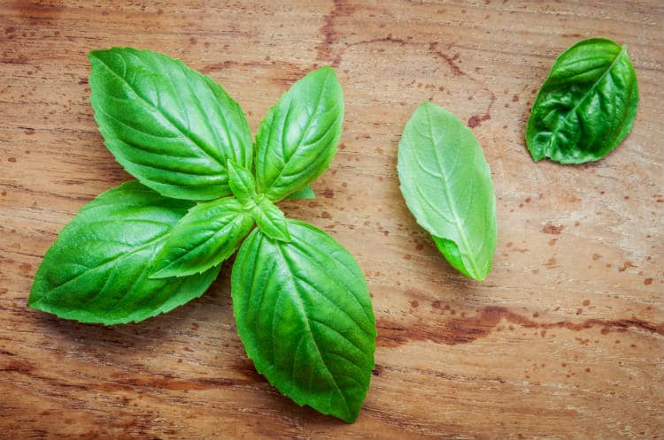 12 Unique Benefits & Uses of Basil Essential Oil