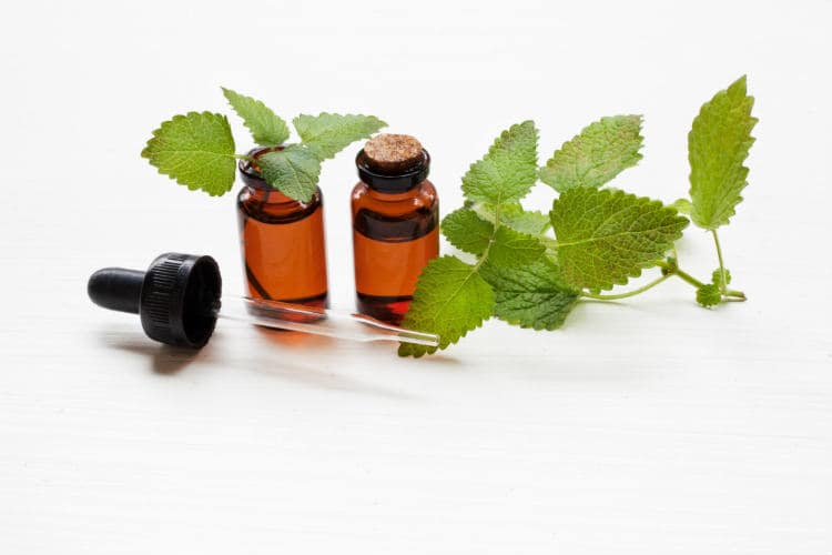 13 Benefits of Melissa Essential Oil and Ways to Use It