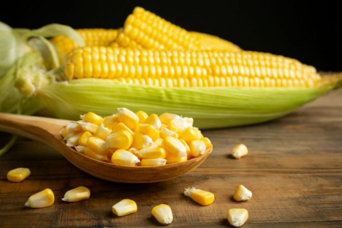 is corn a vegetable or a grain